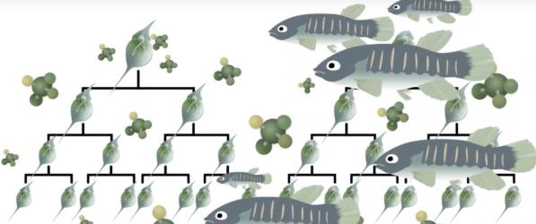 Epigenetics graphic